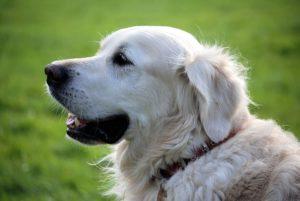 Čipování psů @ Černiv | Černiv | Ústecký kraj | Česko